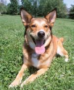 Dog in field_T