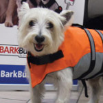 Bark Buckle Up safety vest.