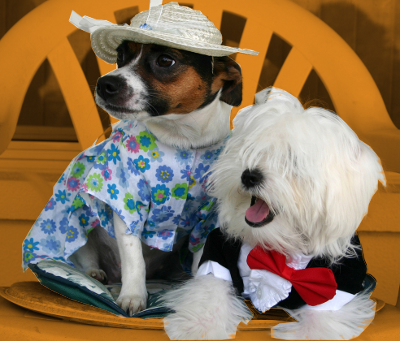costumed pets