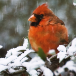 Winter bird source StockSnap